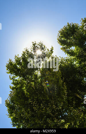 Sunburst durch die Tress in Rom, Italien - Stockfoto
