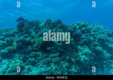 korallenriff mit schwarm von fischen scalefin anthias unterwasser stockfoto bild 168722579. Black Bedroom Furniture Sets. Home Design Ideas