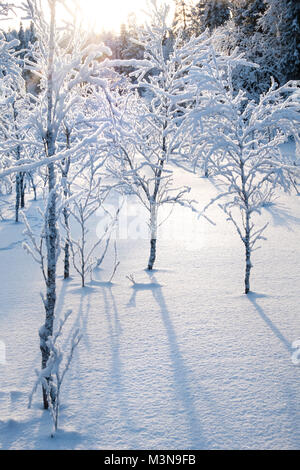 Verschneiten Wälder im Norden Finnlands Stockfoto
