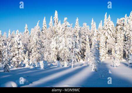 Verschneiten Wälder im Norden Finnlands - Stockfoto
