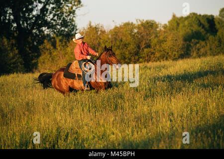 Junge Reitpferd im Feld - Stockfoto