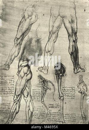 Knochen Beine Anatomie Stockfoto, Bild: 80197126 - Alamy