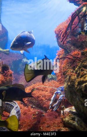 Unterwasser-Szene, zeigt verschiedene Cfishes schwimmen - Stockfoto