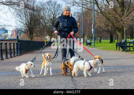 Glasgow, Schottland, Großbritannien. 16. Februar, 2018. UK Wetter. Dog Walker genießen Sie den kalten, trockenen - Stockfoto