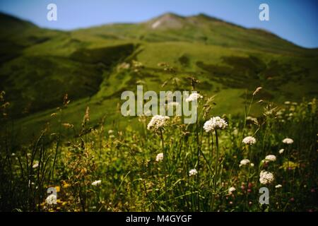 Wildblumen blühen unter den grasbewachsenen Flächen höhere Swanetien, Georgien - Stockfoto