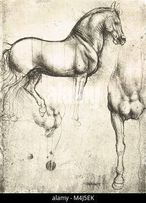 Anatomische Studie der Muskeln der Beine von Leonardo da Vinci ...