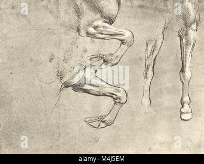 Vier Studien von Pferden Beine, equine Anatomische Zeichnung ...