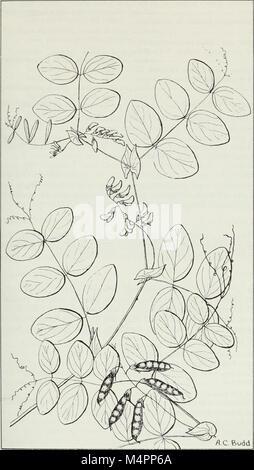 Budd's Flora der kanadischen Prärieprovinzen (1987) (20393984016)