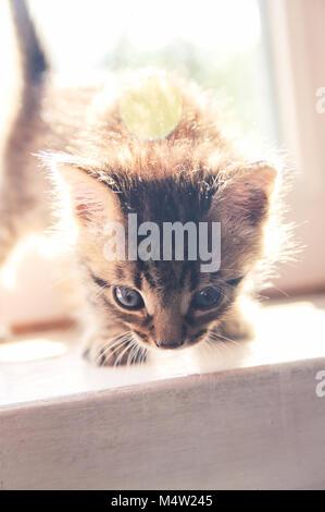 Kätzchen sitzt auf einem Fenster in der Sonne - Stockfoto