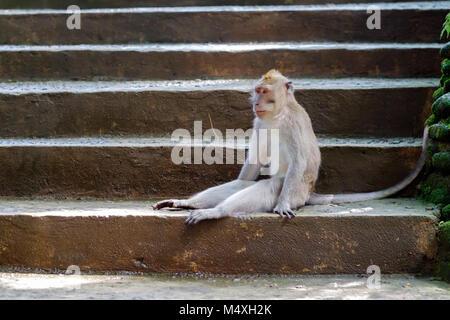 Wilder Gay-Analfick Auf Der Treppe