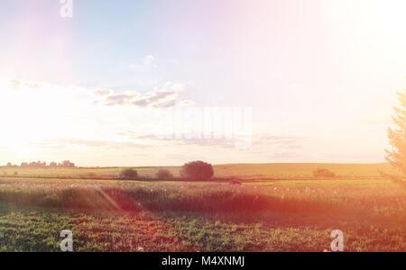 Landschaft ausserhalb der Stadt. Wiese und blauer Himmel. Sonnenuntergang ov