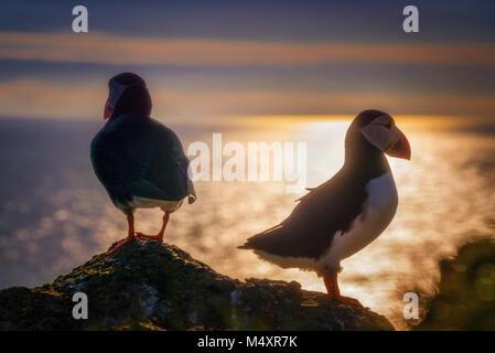 Zwei Papageientaucher auf Mykines Insel im Abendlicht, Färöer Inseln - Stockfoto