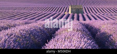 Panoramablick auf lavendelfelder in Pierrerue mit Stein Haus im Sommer. Alpes de Haute Provence, Region PACA, Frankreich - Stockfoto