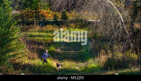 Eine ältere kaukasische Frau geht ihren Sheltie Hund auf einem Waldweg im Herbst in Lissabon, NH, USA. - Stockfoto