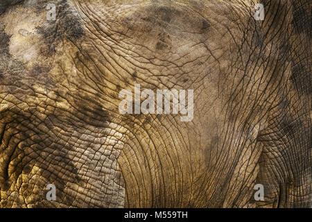 Hintergrund der Elefantenhaut - Stockfoto