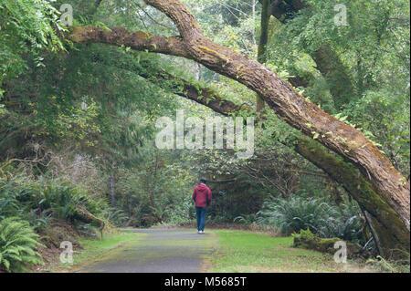 Ein Mann in einem roten Mantel geht weg, auf einen Weg in den Wald mit großen Farn bedeckt Bäume wölben Overhead - Stockfoto