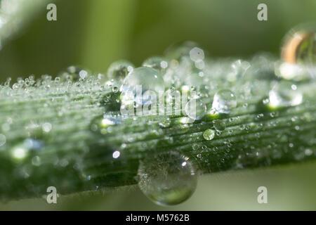 Ein Tropfen, abstrakt, Hintergrund, hell, sauber, Farbe, Tau, Tropfen, frisch, grün, Blatt, Leben, Licht, Makro, - Stockfoto