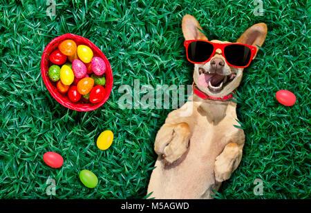 Lustige glücklich podenco Osterhase Hund mit viel Eier um auf Gras und Korb, Schlafen und in dieser Saison ruhen - Stockfoto