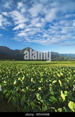 Schönen Morgen Wolken über dem überschwemmten taro Felder in Hanalei Valley auf Hawaii Insel Kauai. - Stockfoto