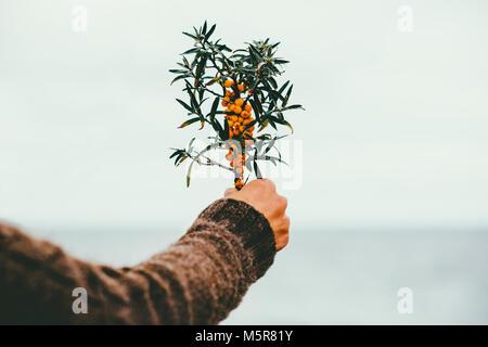 Frau hand Sanddornbeeren Bio Lebensmittel im Freien gesunde Lebensweise Pflanze frisch abgeholt - Stockfoto