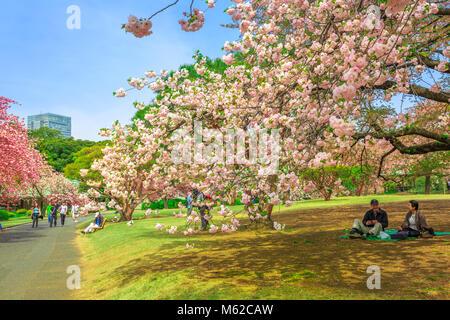 Tokyo, Japan - 17. April 2017: Senior paar Leute entspannen unter blühenden Kirschbaum in Shinjuku Gyoen Garden. - Stockfoto