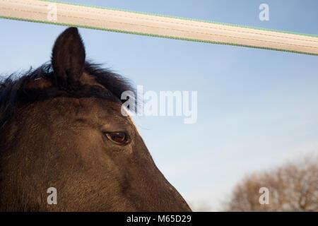 Detail der dunklen Pony im Stall. - Stockfoto