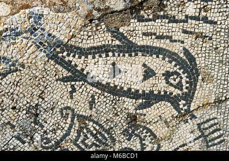 Römische Mosaik eines Fisches. Volubilis Archäologische Stätte, in der Nähe von Meknes, Marokko - Stockfoto