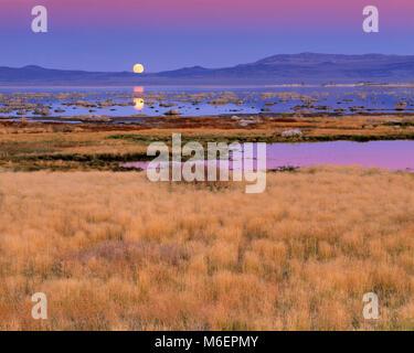 Mondaufgang, Mono Lake, Mono Basin National Forest Scenic Area, Inyo National Forest, Kalifornien - Stockfoto