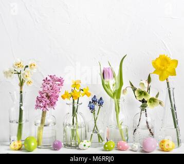 Frühlingsblumen in verschiedenen Glasvasen - Stockfoto