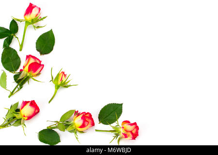 Blumen-Komposition. Gestell aus Rosenblüten. Flach legen, Top Aussicht - Stockfoto