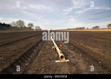 Vorbereitung der Flächen im Frühjahr für den Anbau von tulpenzwiebeln: Leitung für die Sprinkleranlage in Blumenbeeten - Stockfoto