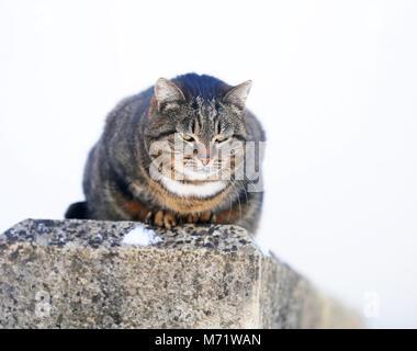 Schöne Katzen auf der Straße eine Nahaufnahme - Stockfoto