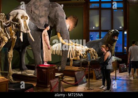 23. AUGUST 2017, Wien, Österreich: Exponate und Ausstellungen im Museum für Naturkunde, Wien. - Stockfoto