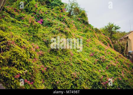 Kaffee Baum Blüte mit weißer Farbe auf Zweig Stockfoto, Bild ...