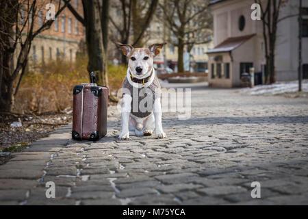 Jack Russell Hund verlassen und allein auf der Straße oder der Straße links, mit Gepäck Tasche und bat, um angenommen - Stockfoto