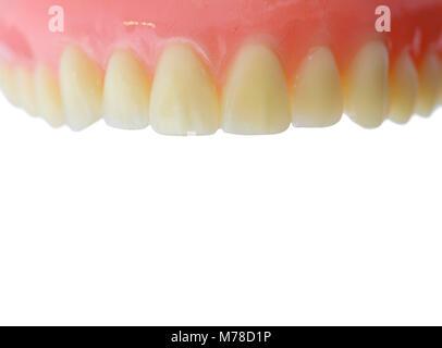 Zähne, Zahnfleisch Modell mit kopieren. Auf weissem Hintergrund ...