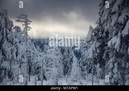 Brocken, Nationalpark Harz - Stockfoto