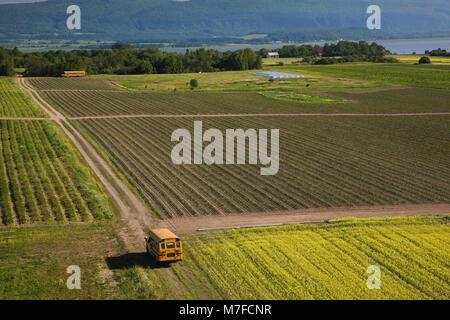 Hohe Betrachtungswinkel eines landwirtschaftlichen Feld und gelben Schulbusse im Sommer, Aquitaine, Ile d'Orleans, Quebec, Kanada. Stockfoto