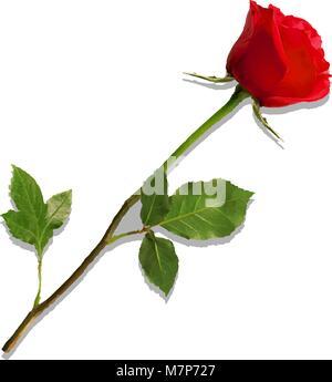 Vector Illustration von photo-realistisch, sehr detaillierte Blume der rote Rose auf weißem Hintergrund. Schöne - Stockfoto