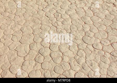Schlamm Textur des Prisma Austrocknung Trocknungsrisse im Boden. - Stockfoto