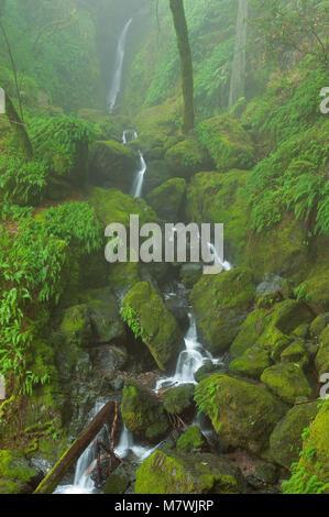 Fällt, Cataract Canyon, Mount Tamalpais, Marin County, Kalifornien - Stockfoto