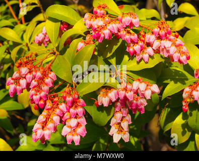 Büsche von farbenfrohen Blumen auf dem Hintergrund des blauen ...