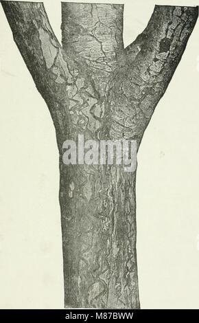 Ökonomische Entomologie für den Landwirt und Obst - Züchter - und für die Verwendung als Text-Buch in der landwirtschaftlichen Schulen und Hochschulen (1906) (14755152316)