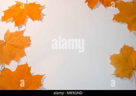 Bunte orange Ahornblätter mit Copy space frame. - Stockfoto