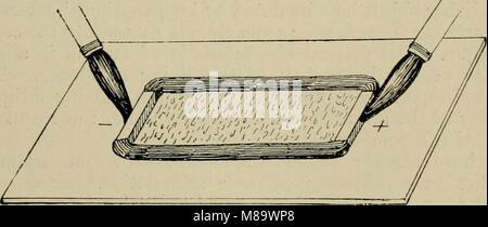 Allgemeine Physiologie; einen Überblick über die Wissenschaft des Lebens (1899) (14759998656) - Stockfoto