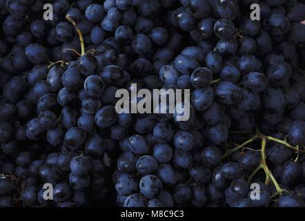 Rotweintrauben Hintergrund dunkel blauen Trauben Trauben Trauben - Stockfoto