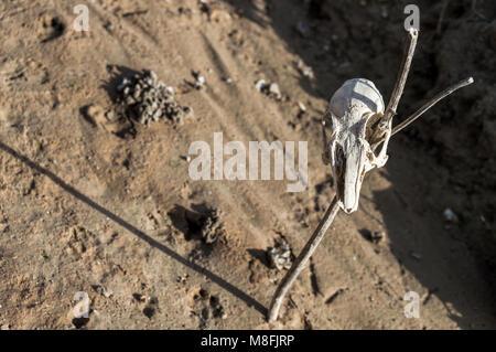 Anatomie des Gehirns Ratte Stockfoto, Bild: 66989707 - Alamy