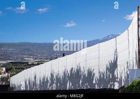 Schatten von Bananenpflanzen auf weißem Tüll Zaun um eine Plantage, mit blauem Himmel und einem schneebedeckten - Stockfoto