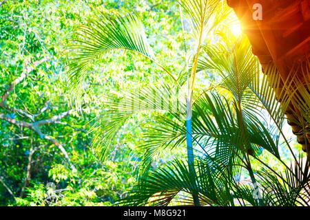 Tempel in Sri Lanka, das Dach eines Gebäudes über frisches Grün Palm Blätter Hintergrund, ruhige und spirituelle - Stockfoto