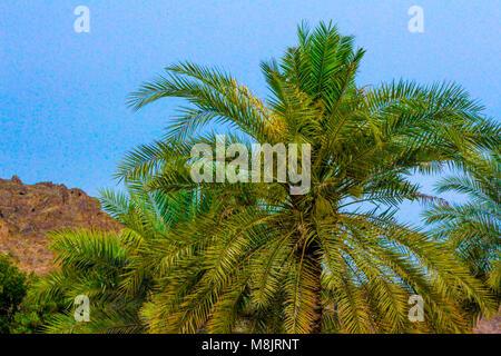 Palm Tree vor Berg, Muscat Oman Retro Palmen auf Sommer tropische Ufer Foul Bay, Barbados, Karibik stilisierte - Stockfoto